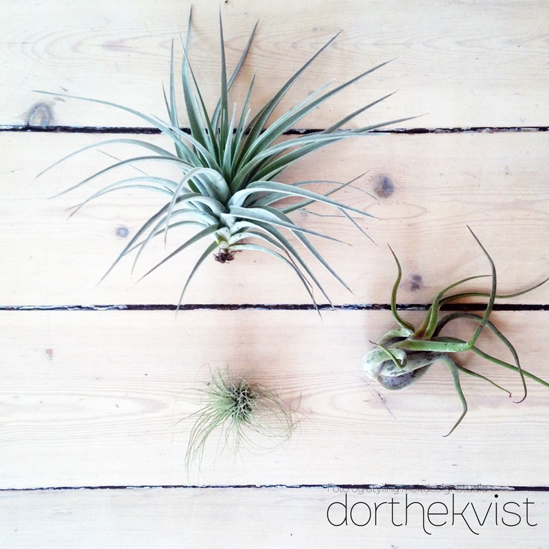 DIY flying airplants Foto og styling Dorthe Kvist Meltdesignstudio 1