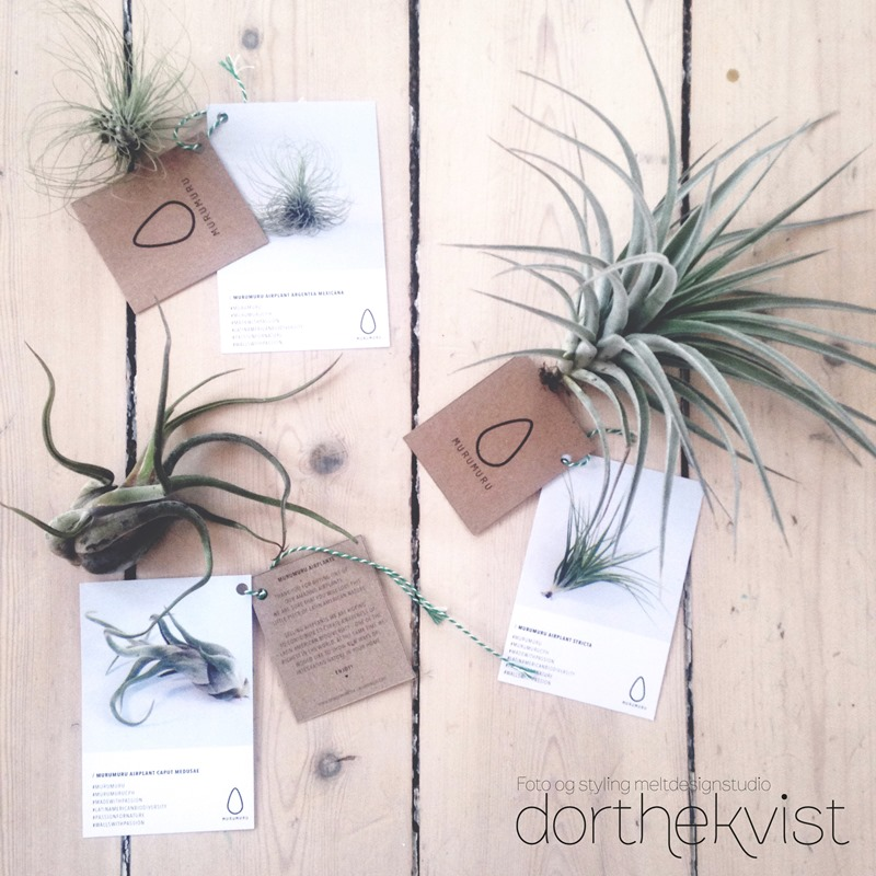 DIY flying airplants Foto og styling Dorthe Kvist Meltdesignstudio 2