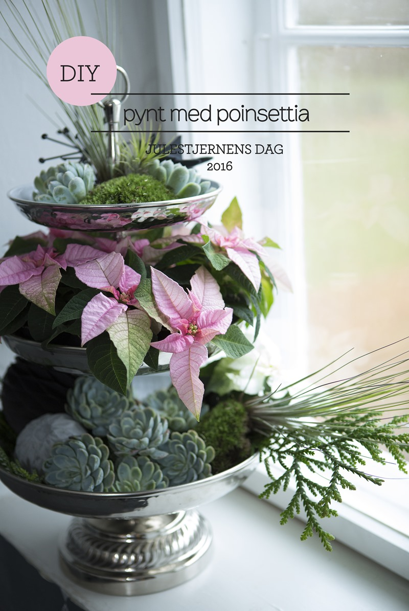 Poinsettia dag 2016 Eckmann event Floradania stars for europe Dorthe Kvist Meltdesignstudio a